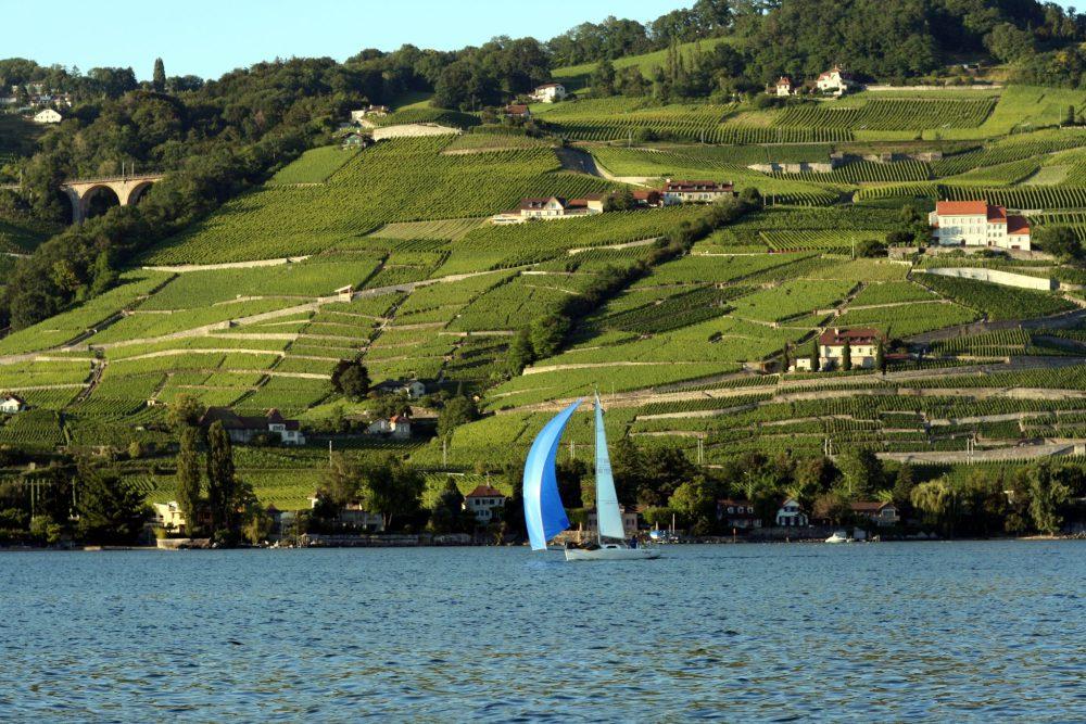 Lake_Geneva_Lavaux.jpg