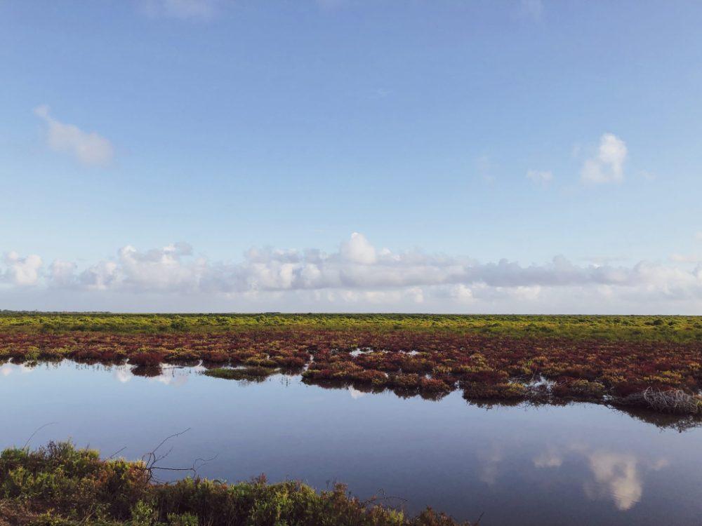 Marsh land, Hamsaladeevi Beach