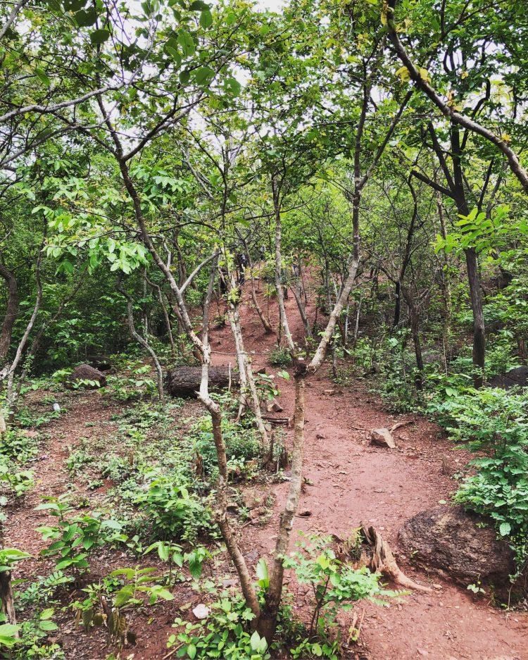 Nature Trails Anantagiri Hills