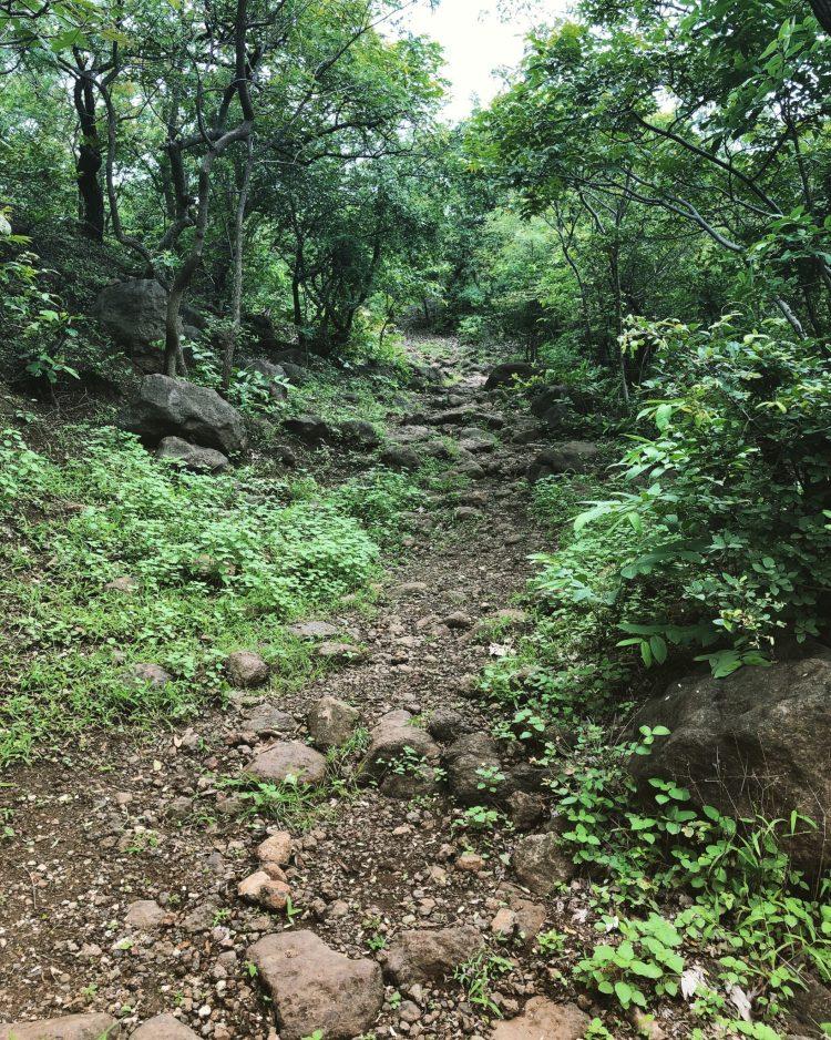 A trail in Anantagiri Hills